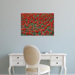 Easy Art Prints Adam Jones's 'Pattern In Tulip Bed' Premium Canvas Art