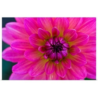 """""""Close-up of pink flower"""" Poster Print"""