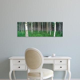 Easy Art Prints Panoramic Images's 'Birch Forest, Punkaharju, Finland' Premium Canvas Art