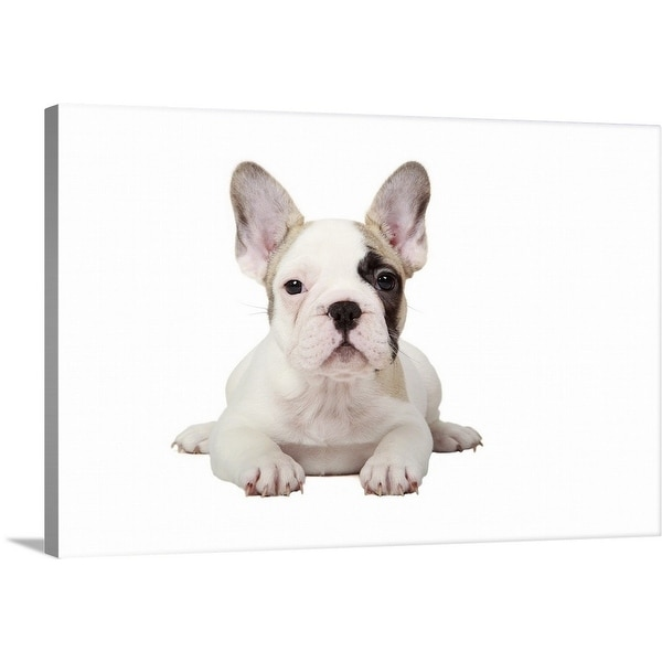 Shop Premium Thick Wrap Canvas Entitled Fawn Pied French