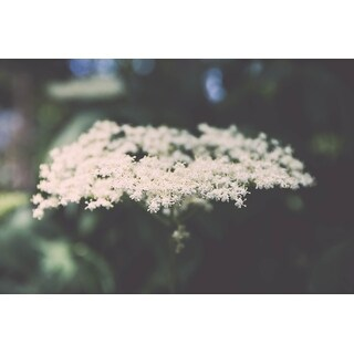 White Flowers Photograph Wall Art Canvas (More options available)