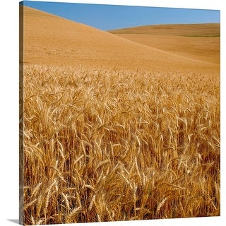 """Wheat crop in a field, Palouse, Whitman County, Washington State"" Canvas Wall Art"