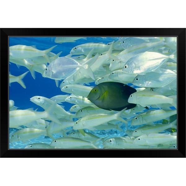 """Yellow surgeon fish with yellow stripe goldfish"" Black Framed Print"