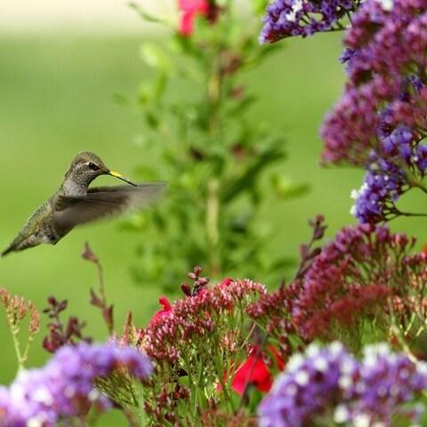 Hummingbird Pre-Seeded Flower Mat - 3 Pack with Garden Shovel