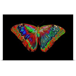 Poster Print entitled Colorful Butterfly