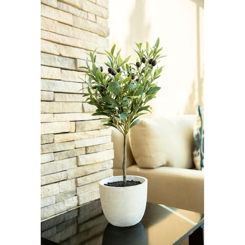 "28"" Olive Tree in 7.25"" Cement Pot,Gray - ONE-SIZE"
