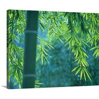 Premium Thick-Wrap Canvas entitled Bamboo tree in a forest, Saga Prefecture, Japan