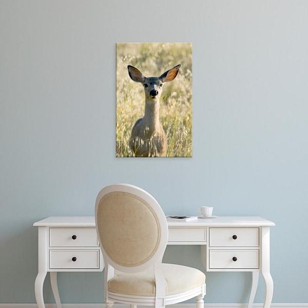 Easy Art Prints Paul Colangelo's 'Mule Deer' Premium Canvas Art