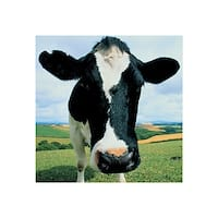 ''Cow'' by Peter Cade Photography Art Print (15.75 x 15.75 in.)