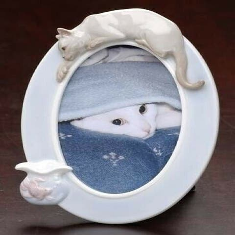 """Club Pack of 12 Oval Siamese Cat and Fish Photo Frames 8"""""""