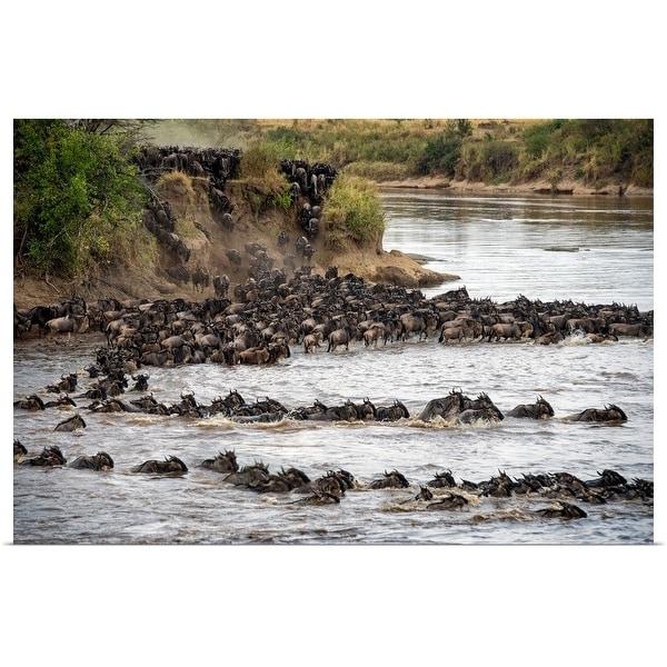 """Wildebeests crossing Mara River, Serengeti National Park, Tanzania"" Poster Print"