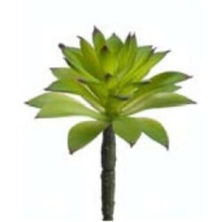 CS1564-GR 6 in. Succulent Green- Case of 24