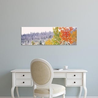 Easy Art Prints Panoramic Images's 'Winter, Aspens, USA' Premium Canvas Art