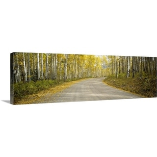 """Road passing through a forest, Colorado"" Canvas Wall Art"