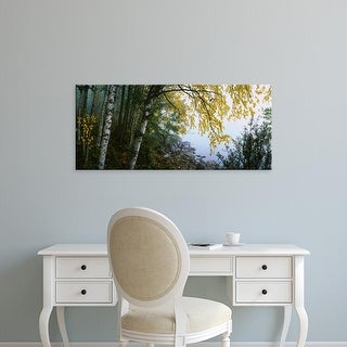 Easy Art Prints Panoramic Images's 'Birch trees in a forest, Puumala, Finland' Premium Canvas Art