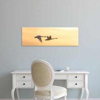 Easy Art Prints Panoramic Image 'Trumpeter Swans, Riverlands Migratory Bird Sanctuary, St. Charles,Missouri' Canvas Art