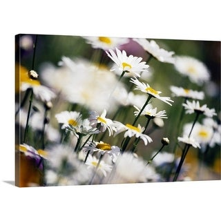 Premium Thick-Wrap Canvas entitled Wildflowers In Bloom