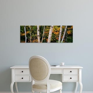 Easy Art Prints Panoramic Images's 'Birch trees in a forest, New Hampshire, USA' Premium Canvas Art
