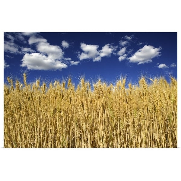 """""""Field of wheat"""" Poster Print"""