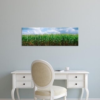 Easy Art Prints Panoramic Images's 'Clouds over a corn field, Christian County, Illinois, USA' Premium Canvas Art