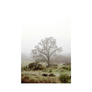 Easy Art Prints Alan Blaustein's 'Oak Tree #56' Premium Canvas Art
