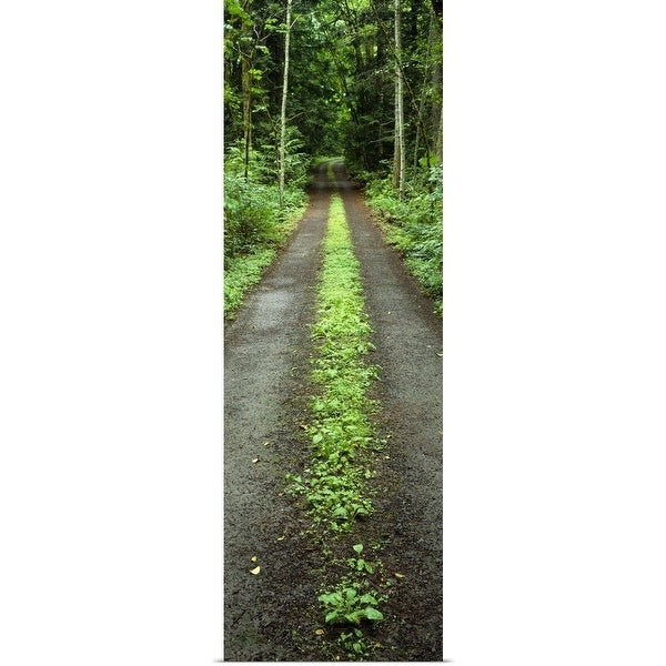 """Lush foliage lining a wet driveway, Bainbridge Island, Washington"" Poster Print"
