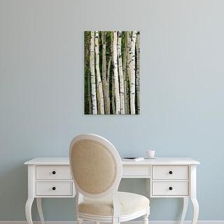 Easy Art Prints Michel Hersen's 'Aspen Tree Trunks' Premium Canvas Art