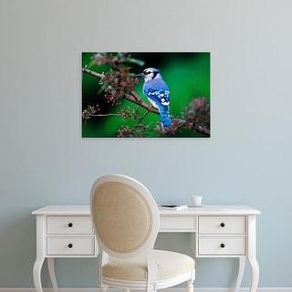 Easy Art Prints Adam Jones's 'Blue Jay' Premium Canvas Art