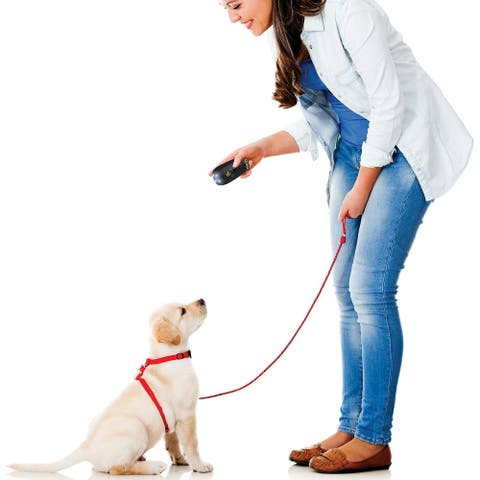 Emsco Group Pet Zoom Command Ultimate Dog Training System
