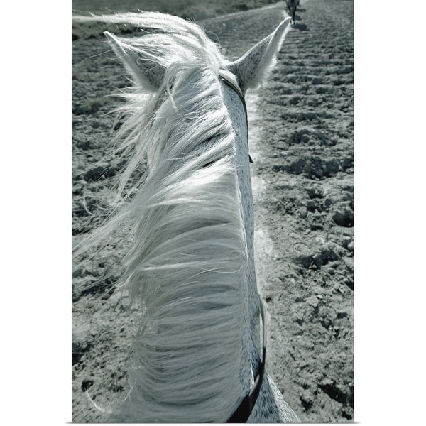 """""""White horse on beach, close-up"""" Poster Print"""