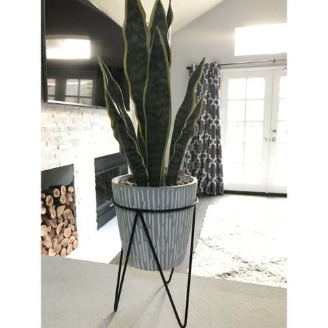 1.8FT TTL Height Snake Plant - ONE-SIZE