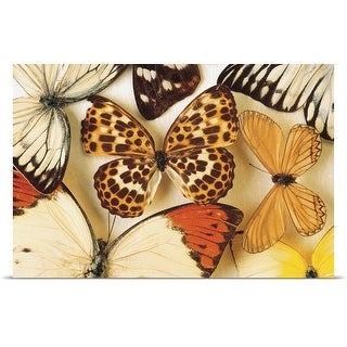 Poster Print entitled Butterfly collection