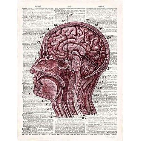 Shop Vintage Anatomy Brain Poster Print By Christopher James 18 X