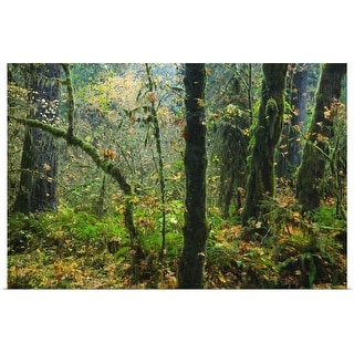 """""""Moss draping trees in old-growth forest, Hoh Rain Forest, Olympic National Park, Washington"""" Poster Print"""
