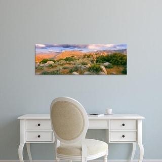 Easy Art Prints Panoramic Image 'Yucca plants in desert, Culp Valley, Anza Borrego Desert  Park, California' Canvas Art