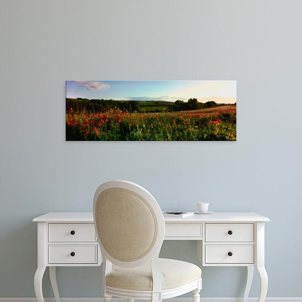 Easy Art Prints Panoramic Image 'Wild poppies in field, Wylye Valley, Stapleford, Wiltshire, England' Canvas Art