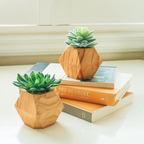 Set of 2 Succ wood pot - ONE-SIZE