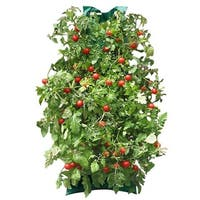 Healthy Tomato Garden with Vertical Growing Bag - Grow Cherry or Roma Tomatoes