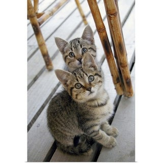 """""""Portrait of two kittens"""" Poster Print"""