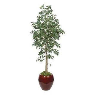 Autograph Foliages P-70592 - 6 Foot Benjamina Ficus Tree - Green
