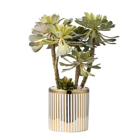 "Striped Potted Succulent Stemx5 In Plated Pot, 14x10x15""H - Green"