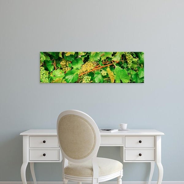 Easy Art Prints Panoramic Images's 'Ripe green grapes on the vine, Quebec, Canada' Premium Canvas Art
