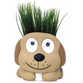 Paint Me Plant Me Dog - brown - 5.0 in. x 5.0 in. x 5.0 in.
