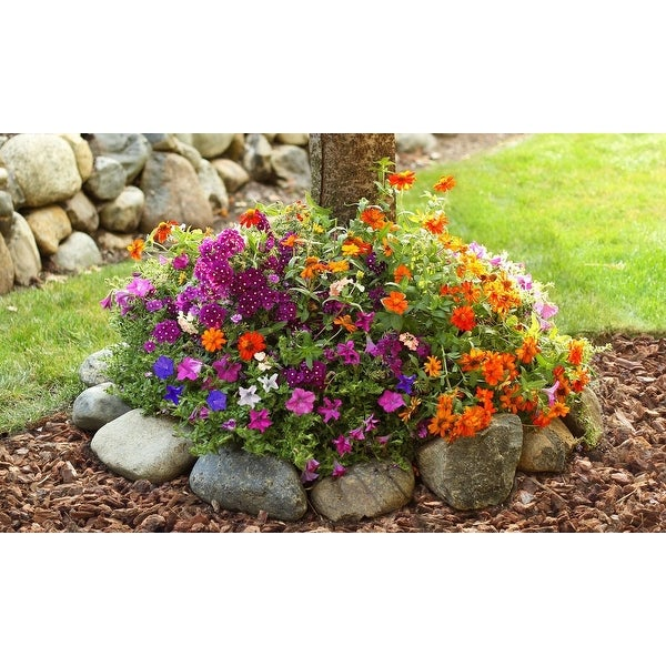 Shop Sunny Tree Ring Flower Seed Mat 2 Pack With Garden