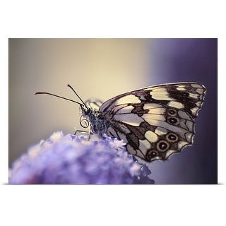 Poster Print entitled Butterfly on flower.