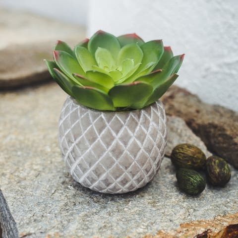 """Faux Succulent in 5"""" Cement Pineapple Planter - ONE-SIZE"""