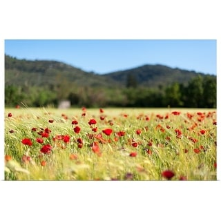 """""""Poppy field in the wind, Signes"""" Poster Print"""