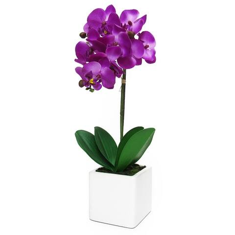 Phalaenopsis Orchid Flower Arrangement in White Square Pot 18in