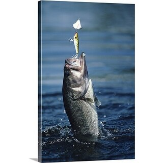Premium Thick-Wrap Canvas entitled Huge largemouth bass jumping