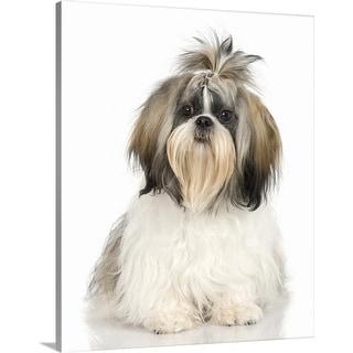 """Studio portrait of Shih Tzu dog"" Canvas Wall Art"